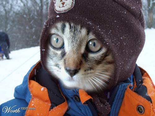 Keep Your Cat Warm in Winter